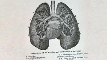 Un dispositif de poumon artificiel pourrait être prêt pour 2020. (Photo d'illustration)