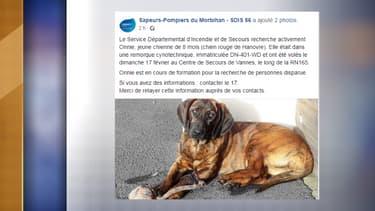 La jeune chienne des sapeurs pompiers de Vannes a été volée