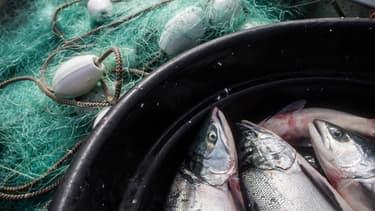 Les poissons seraient contaminés dans les eaux usées qui se jettent dans l'océan.