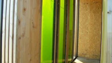 Dans cette bio-façade le consortium mené par le cabinet d'architectes X-TU Research teste la culture de micro-algues en milieu fermé et de façon verticale de façon à réduire la consommation d'eau et d'énergie.
