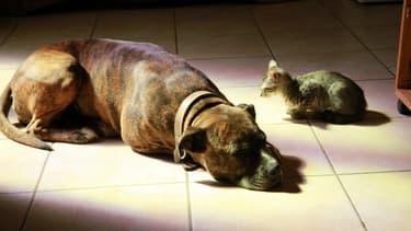 Image d'illustration - un chat et un chien
