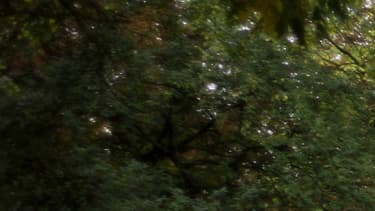 Aux Buttes-Chaumont, en octobre 2012. (photo d'illustration)