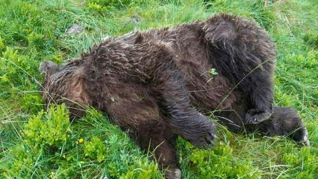 Cette photo publiée sur le compte Twitter de la ministre Elisabeth Borne le 9 juin 2020, montre un ours abattu en Ariège