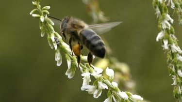 Les apiculteurs subissent des pertes moyennes de 30% de leurs cheptels en hiver et ces chiffres ont augmenté cette année.