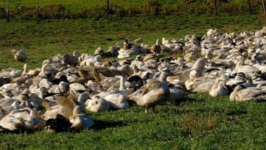 Un élevage de volailles (Photo d'illustration)