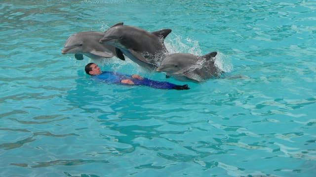 Les dauphins du Parc Astérix en pleine représentation.