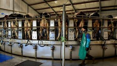 Les producteurs laitiers vont devoir réduire leur production