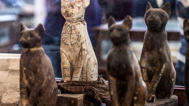 Des momies de chats