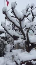 Haut-Rhin: neige à Wittenheim - Témoins BFMTV