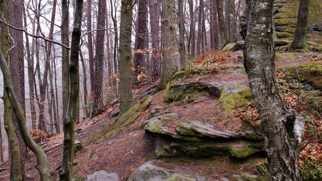 Une forêt (Photo d'illustration).
