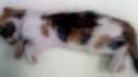 La photo du chaton porteur de la rage, diffusée le 31 octobre 2013 par la Direction générale de la santé