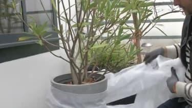 Protéger ses plantes en hiver