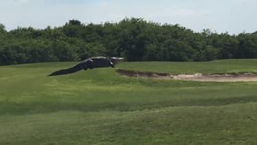 L'alligator mesure près de cinq mètres.