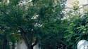 Enquêteurs devant l'ambassade de Suisse à Athènes, où une bombe a explosé mardi sans faire de victimes. Un autre colis piégé a été découvert à l'ambassade de Bulgarie. /Photo prise le 2 novembre 2010/REUTERS/Yiorgos Karahalis