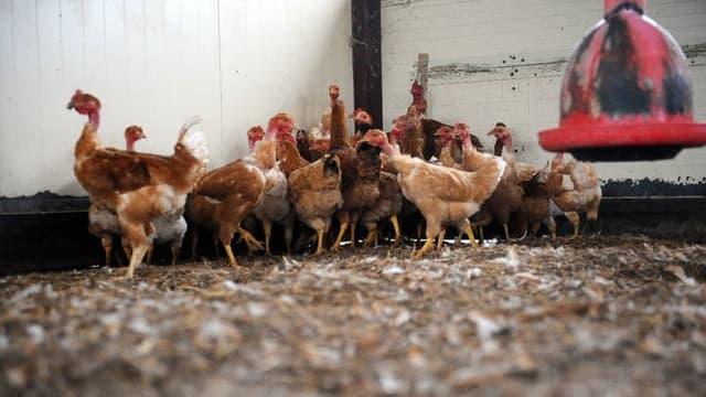 Certains secteurs, comme l'élevage de volaille, ne bénéficient d'aucun soutien.