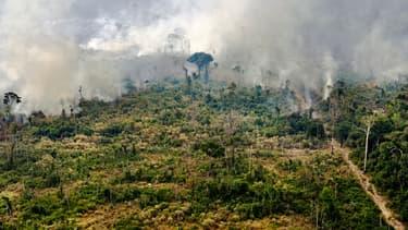 Un feu au sein de l'Amazonie, près de Porto Velho le 25 août 2019.