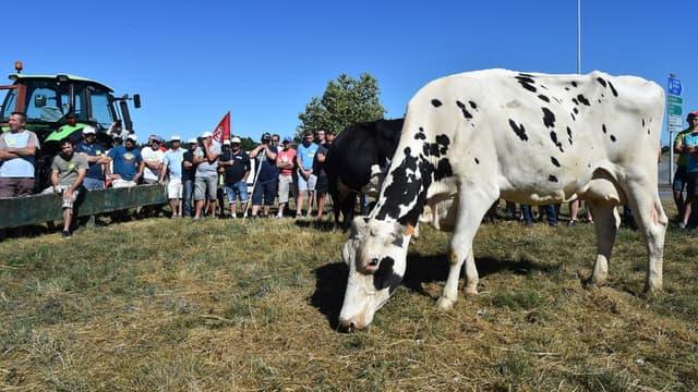 Des producteurs laitiers manifestent devant le siège de Lactalis depuis lundi.