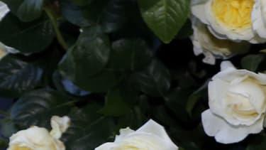 Jane Birkin aux Jardins des Tuileries à Paris en 2015