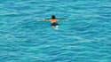 Un nageur à Marseille