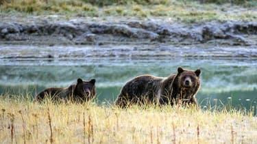 Une femme et son bébé de dix mois ont perdu la vie après avoir été attaqués par un grizzli.