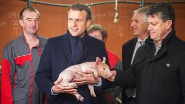 Emmanuel Macron dans un élevage porcin le 17 janvier 2017, à Moustoir-Remungol