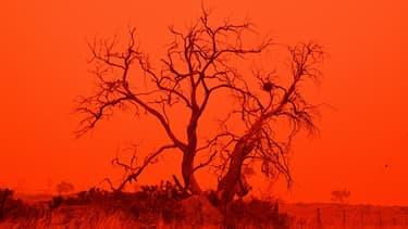 Des feux de forêt ravage l'Australie depuis le mois de septembre.