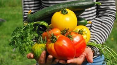 En louant sur Monpotager.com une parcelle de 15m2, le client peut espérer une récolte de 20 à 50 kilos par an.