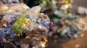 Des bouteilles de plastique recyclées
