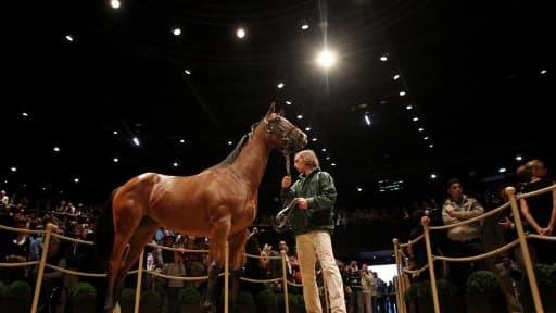Les professionnels du milieu sont prêts à débourser des sommes astronomiques pour ces futurs chevaux de course.