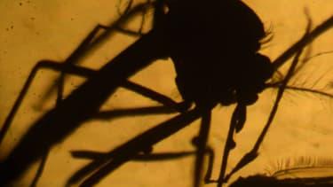 Le virus Zika se transmet principalement par les moustiques tigres.