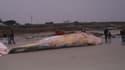 """Une baleine de 16 tonnes s'est échouée sur la plage de """"Pors Carn"""" à Penmarc'h."""