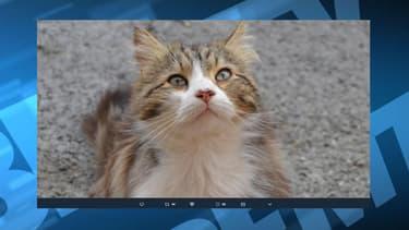 Le chat avait été tué le 31 mai dernier.