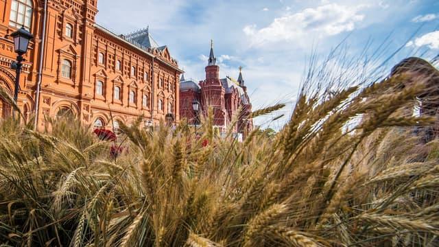 La Russie, premier exportateur mondial de blés, va suspendre ses exportations de blé, seigle, orge et maïs jusqu'au 1er juillet