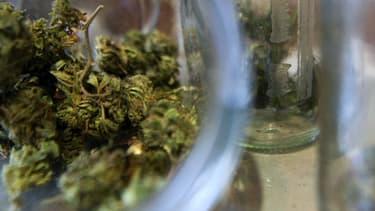 Depuis janvier, la police a saisi près d'une tonne de cannabis en région parisienne.