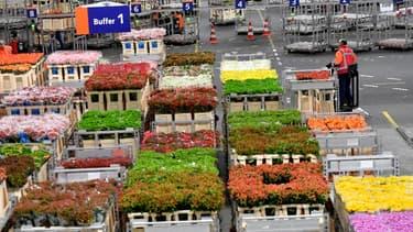 Le Royaume-Uni est le troisième plus grand marché des Pays-Bas  dans le secteur horticole, après l'Allemagne et la France.