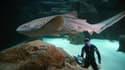 Pierre Frolla s'approche d'un requin-zèbre dans l'aquarium de Paris