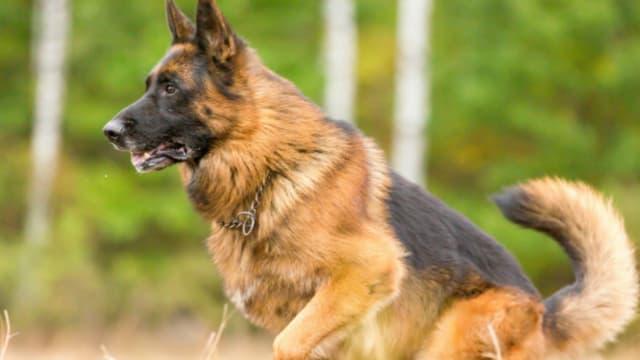 La maison de retraite pour chiens va voir le jour à Marseille
