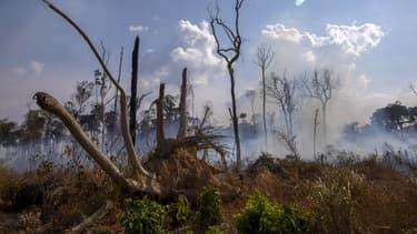 Une forêt touchée par un incendie près de Novo Progresso (Brésil) le 25 août 2019.