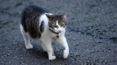 Les vétérinaires recommandent de nettoyer son chat avec des lingettes ou en lui faisant un shampoing.