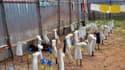 Des gants, bottes et masques servant de protection contre le virus Ebola sont au séchage, le 24 juillet au Liberia.
