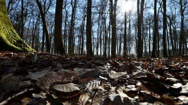 Les Safer ont un droit de préemption sur les bois
