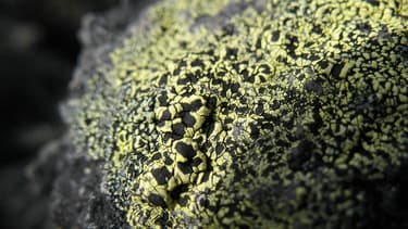 Lichen (Photo d'illustration)