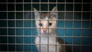 Un chat abandonné, en cage, dans un refuge de la SPA en août 2019 à Gennevilliers, près de Paris