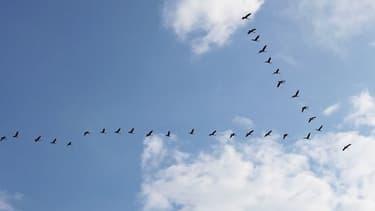 Le bruit du trafic automobile affecterait particulièrement les oiseaux, au cerveau très développé et dont les capacités cognitives sont essentielles pour s'orienter. (Photo d'illustration)