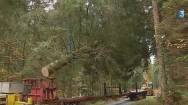 L'arbre a cédé alors qu'il était acheminé sur la remorque.