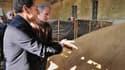 En visite dans une exploitation de l'Essonne, Nicolas Sarkozy a annoncé son intention de convoquer l'an prochain une réunion des ministres de l'Agriculture du G20 pour discuter des moyens de lutter contre la trop grande volatilité des cours des matières p
