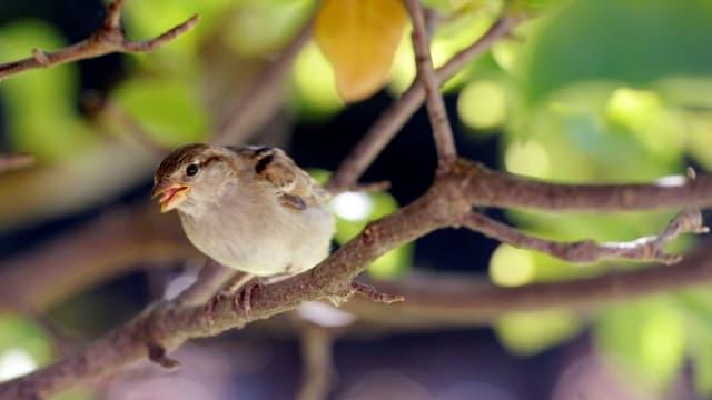 Les associations de protection des oiseaux s'inquiètent de la forte baisse des populations d'oiseaux de villes et des champs.