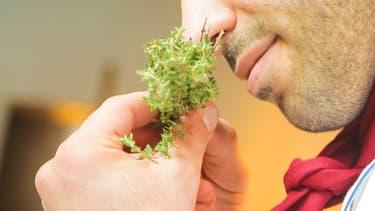 Image d'illustration - Une personne en train de sentir une plante