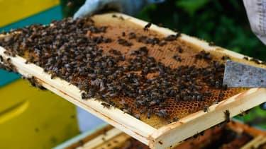 la DGCCRF a pris en flagrant délit une société de logistique mandatée par une société du Sud de la France pour «maquiller » des fûts de miel provenant d'Espagne en en remplaçant les étiquettes par d'autres indiquant une origine France.