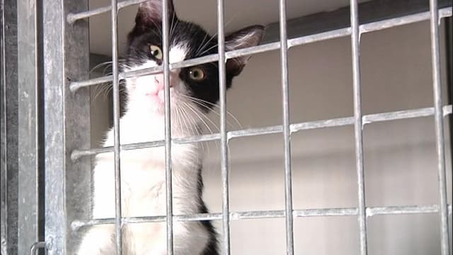 Un chat à adopter. (illustration)
